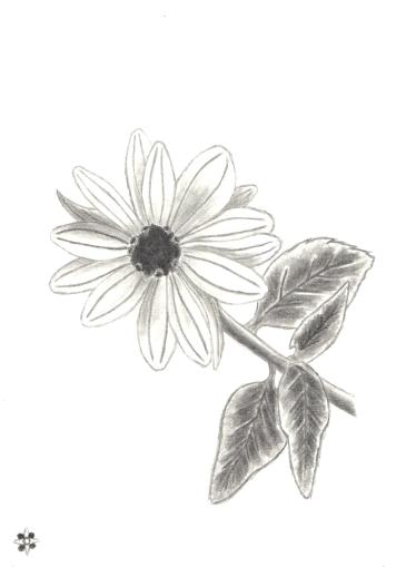 Sunflower Copycat Drawing