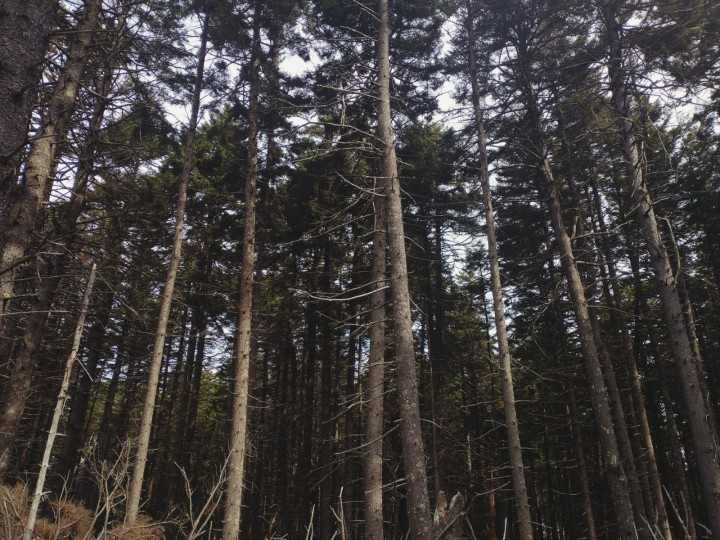 From Silent Wilderness to BlackHead